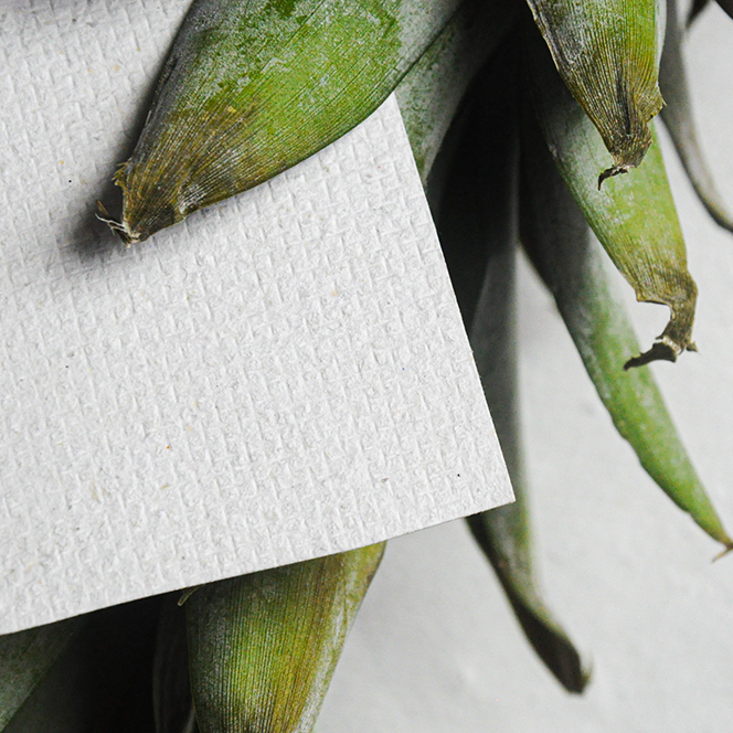 Papier aus den Fasern von Ananasblättern