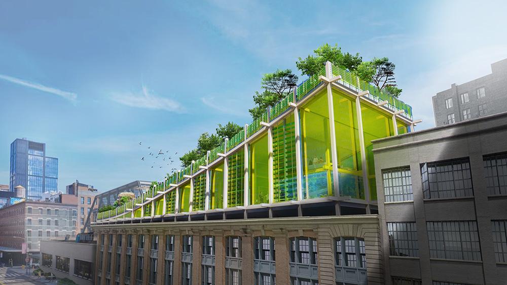 Grüne Städte fürs New European Bauhaus: The Ark, New York.