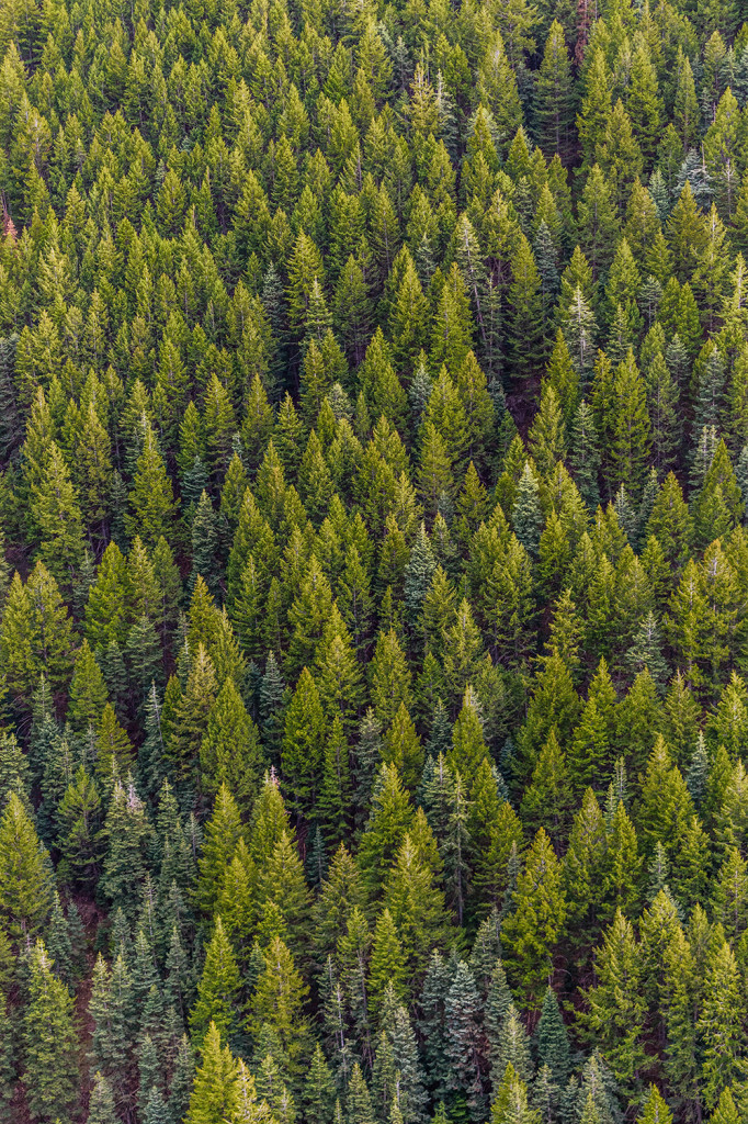 Forstwirtschaft als Trumpfkarte des New European Bauhaus